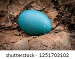 Close Up Of  A Single Emu Egg...