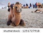 leh ladakh  india   october 10...   Shutterstock . vector #1251727918