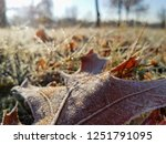 macro view of sunlit colorful... | Shutterstock . vector #1251791095
