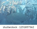 texture of frosted glass.... | Shutterstock . vector #1251857362