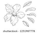 adenium obesum house plant.... | Shutterstock .eps vector #1251987778