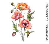 red poppi flowers bouquet.... | Shutterstock . vector #1252010788