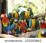 Macaws Parrot Bird On Location
