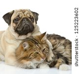 Stock photo the dog embraces a cat isolated on white background 125223602