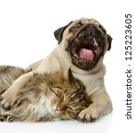 Stock photo the dog and cat lie together isolated on white background 125223605