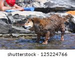 Dachshund Standing In Water An...