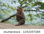 funny monkey lives in a natural ... | Shutterstock . vector #1252357285