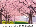 spring in japan  the shioiri... | Shutterstock . vector #1252366162