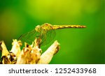 Dragonfly isolated on green....
