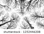 looking up in beech forest  ... | Shutterstock . vector #1252446208