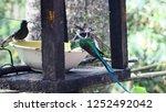 beautiful birds are drinking... | Shutterstock . vector #1252492042