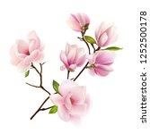 magnolia. beautiful. gentle.... | Shutterstock .eps vector #1252500178