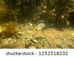 seabed unter water  | Shutterstock . vector #1252518232