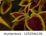 bizarre and unique leaf and... | Shutterstock . vector #1252546138