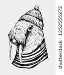 Sketch Of A Walrus In A Cap An...