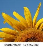 Yellow Sunflower Leave Pollen...