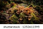 Mushrooms On The Forest Floor...