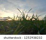 detail of moisture drops on... | Shutterstock . vector #1252938232