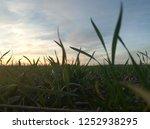detail of moisture drops on... | Shutterstock . vector #1252938295
