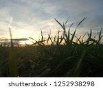 detail of moisture drops on... | Shutterstock . vector #1252938298