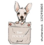 little dog in pocket | Shutterstock .eps vector #1252950805