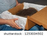 close up. box with shoes in... | Shutterstock . vector #1253034502