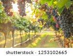 grape harvest italy | Shutterstock . vector #1253102665