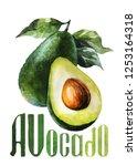 Avocado. Hand Drawing...