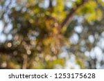 reclaimed background bokeh blur | Shutterstock . vector #1253175628
