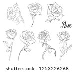 a set of sketches of roses. a... | Shutterstock .eps vector #1253226268
