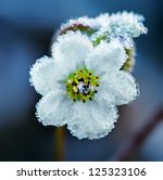 Frozen White Flower  Macro Shot