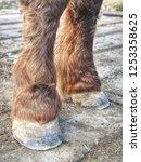 farrier work. clear hoof after... | Shutterstock . vector #1253358625