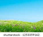 spring meadow with flowers and... | Shutterstock . vector #1253359162