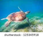 green sea turtle. egypt. red sea | Shutterstock . vector #125345918