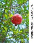 pomegranate   Shutterstock . vector #125354276