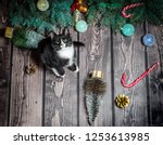 Stock photo new year flat lay black and white cat on a wooden floor with christmas decorations and green fir 1253613985