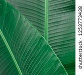 tropical banana leaf texture ... | Shutterstock . vector #1253773438