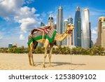 camel in front of dubai marina... | Shutterstock . vector #1253809102