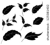 Set Of Leaves Of Plants And...