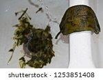 stuffed green chile peppers ... | Shutterstock . vector #1253851408