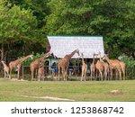 nov 15 2018 tourists feeding... | Shutterstock . vector #1253868742