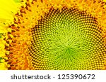 Close Up Of Sunflower.