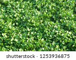 natural scene   closeup top... | Shutterstock . vector #1253936875