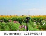 sprinkler watering a tree of...   Shutterstock . vector #1253940145