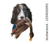 english springer spaniel dog... | Shutterstock .eps vector #1254032092