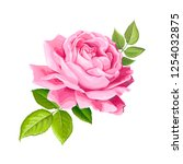 beautiful flower of pink rose... | Shutterstock .eps vector #1254032875
