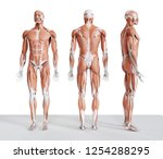 3d rendered medically accurate... | Shutterstock . vector #1254288295