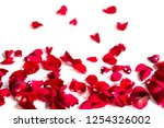 red petal rose on white... | Shutterstock . vector #1254326002
