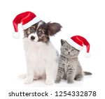 Stock photo papillon puppy and kitten in red christmas hats sitting together isolated on white background 1254332878