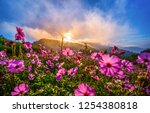 beautiful pink flowers in the... | Shutterstock . vector #1254380818